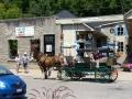 Elora Mews horse